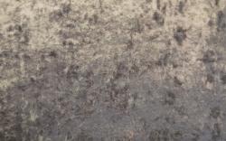 Fossil-17208SENS1162