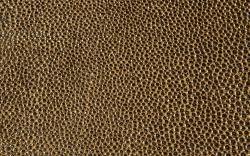 Chestnut-Mocca-F5076040